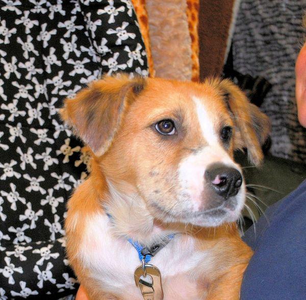 happy tails dog rescue smithtown